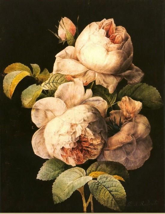 Marie & the Peach Rose