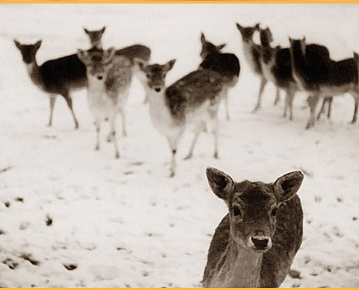 inspiration friday image from tumblr of a baby deer standing in the snow