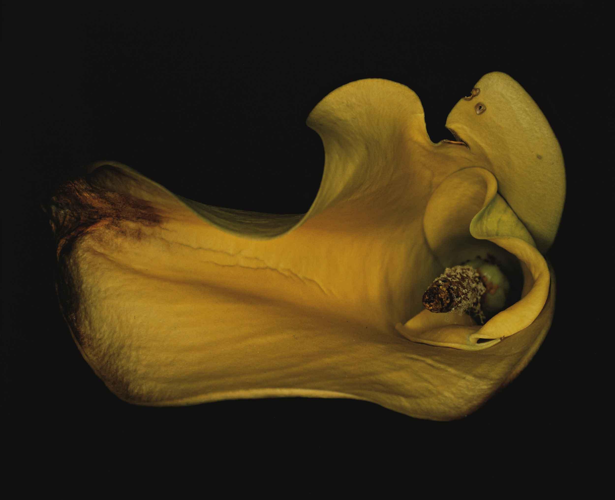 Araki Nobuyoshi Flower Rondeau Kakyoku 1997
